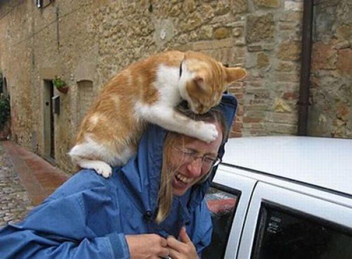 Beware of Animals Attacks (15)