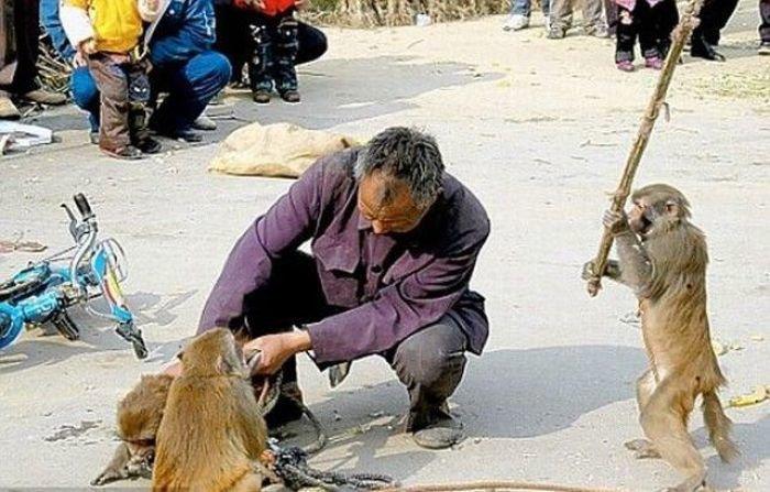 Beware of Animals Attacks (13)