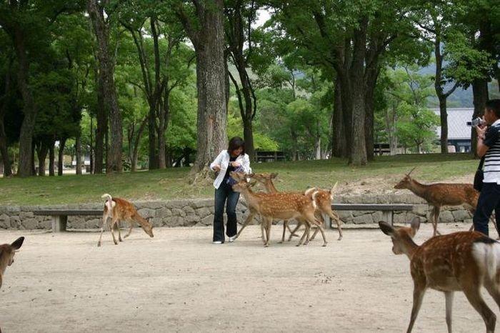 Beware of Animals Attacks (6)