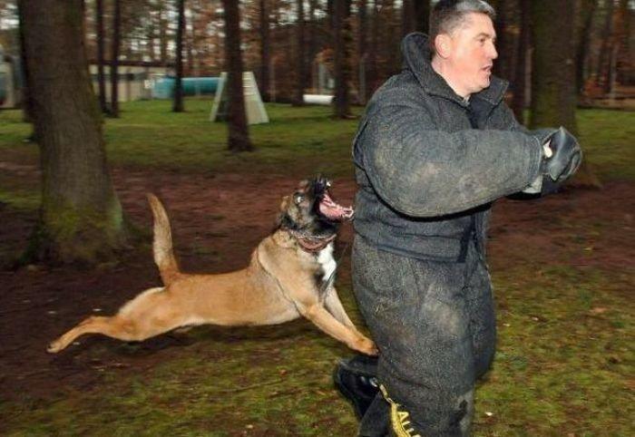 Beware of Animals Attacks (5)