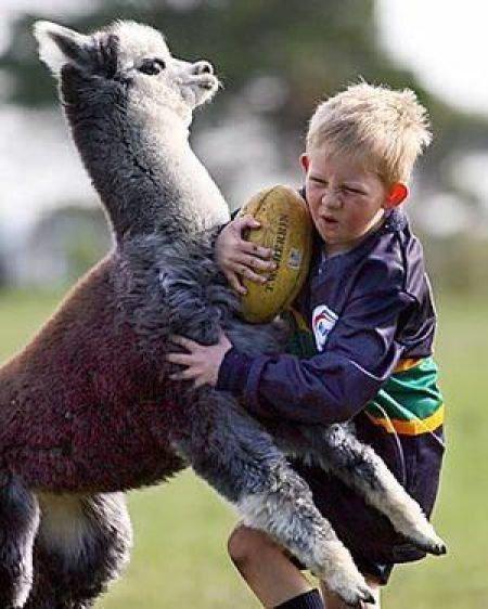 Beware of Animals Attacks (3)