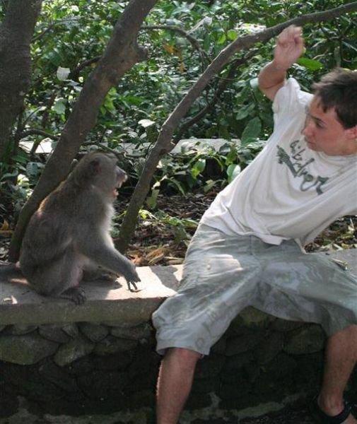 Beware of Animals Attacks (1)