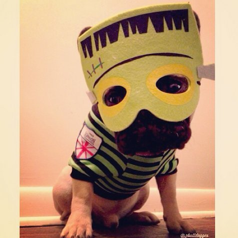 Beautiful Halloween Pet Costumes (30)