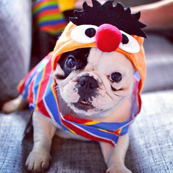 Beautiful Halloween Pet Costumes (29)
