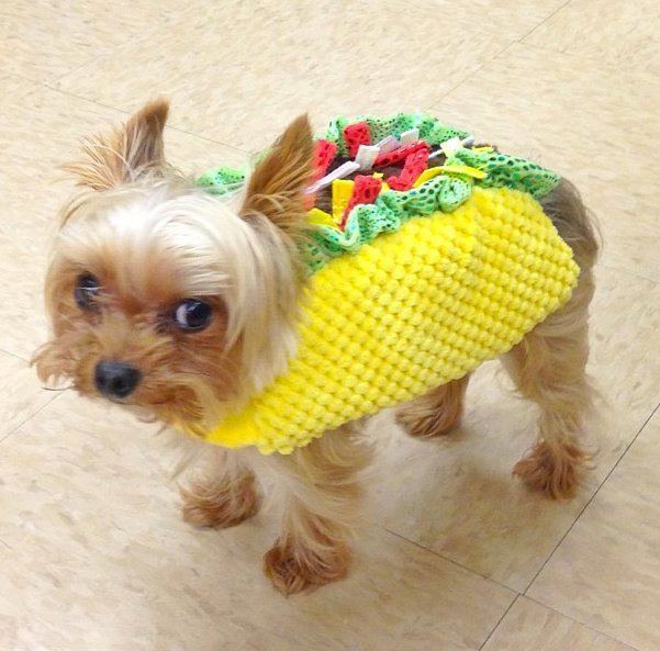 Beautiful Halloween Pet Costumes (28)