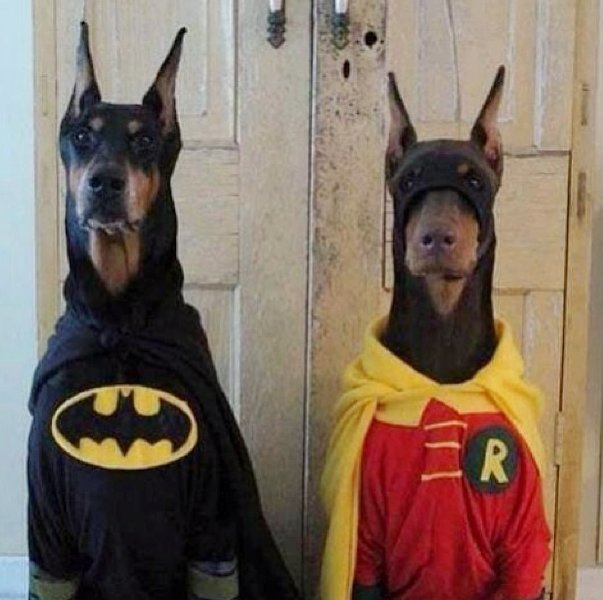 Beautiful Halloween Pet Costumes (26)