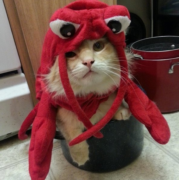 Beautiful Halloween Pet Costumes (22)