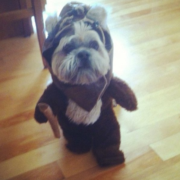 Beautiful Halloween Pet Costumes (20)