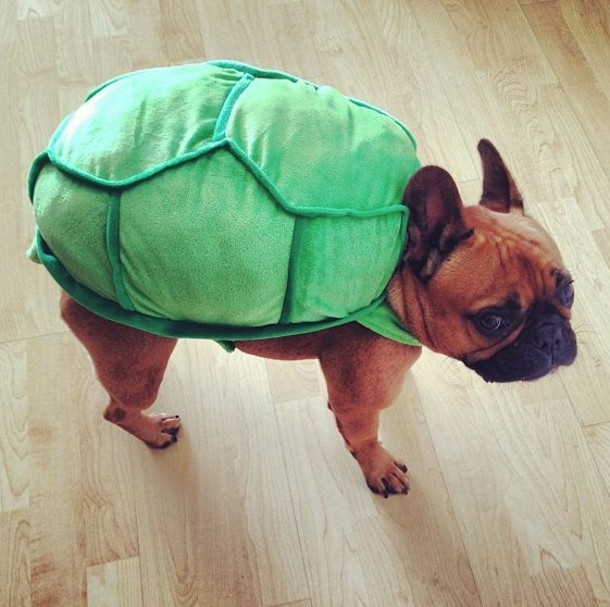 Beautiful Halloween Pet Costumes (17)