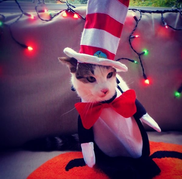 Beautiful Halloween Pet Costumes (16)