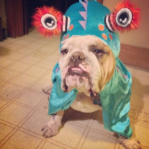 Beautiful Halloween Pet Costumes (13)
