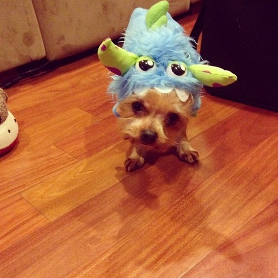 Beautiful Halloween Pet Costumes (12)