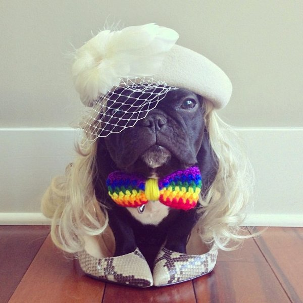 Beautiful Halloween Pet Costumes (9)
