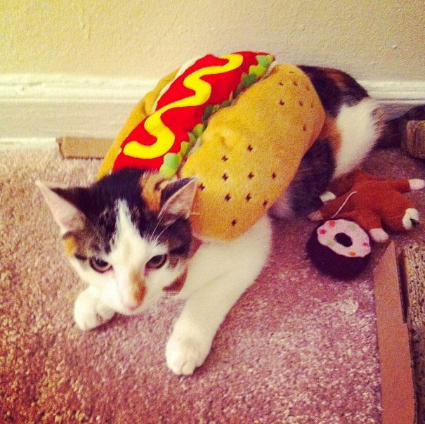 Beautiful Halloween Pet Costumes (6)