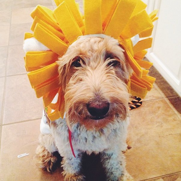 Beautiful Halloween Pet Costumes (4)
