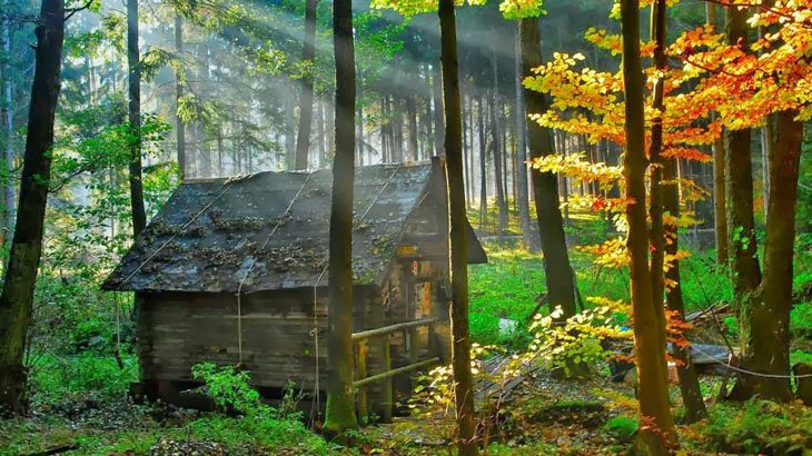 Clean house in Forest (18)