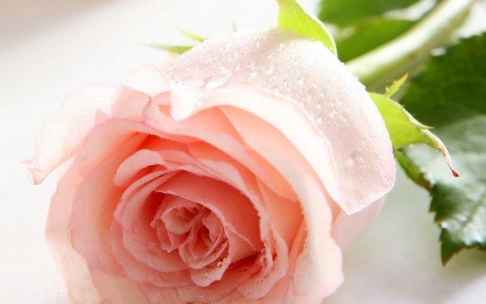 104371040_1375958790_holidays_international_womens_day_flowers_on_holiday_020265_