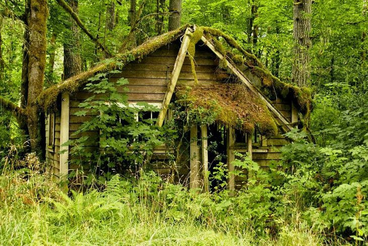Clean house in Forest (6)
