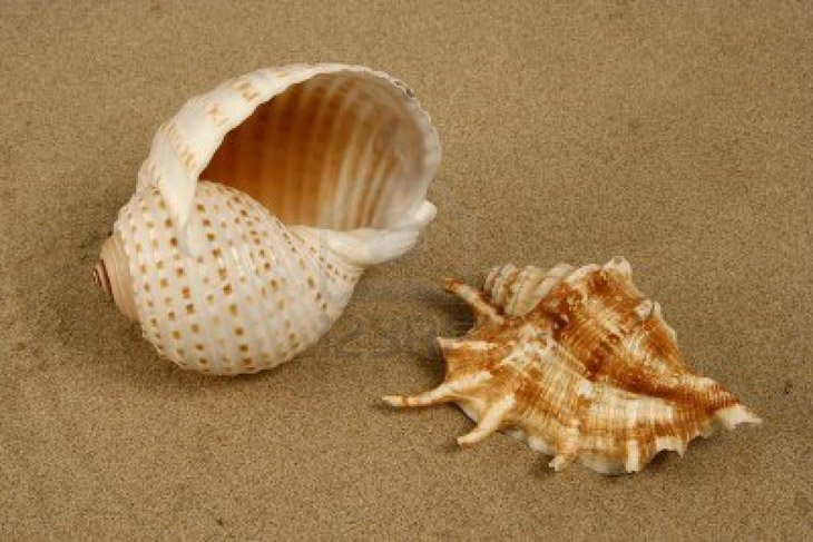 Seashells On The Beach  (10)