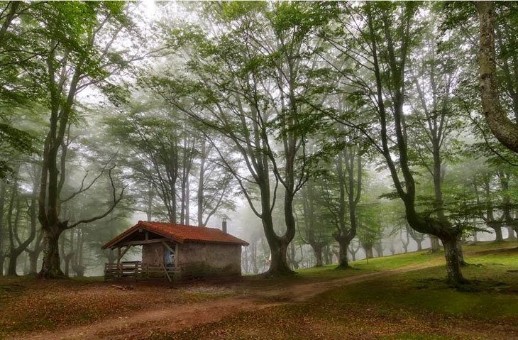 Clean house in Forest (5)