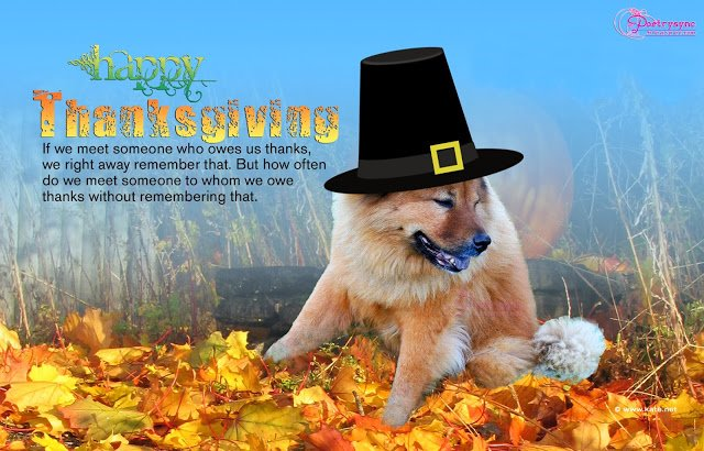 Happy-Thanksgiving-Day-Quote-With-Dog-Picture-Wallpaper-Forest-View