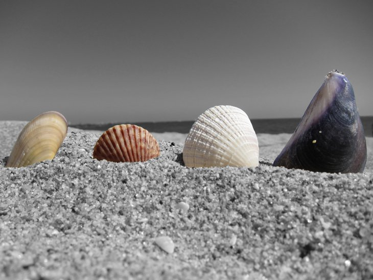 Seashells On The Beach  (3)