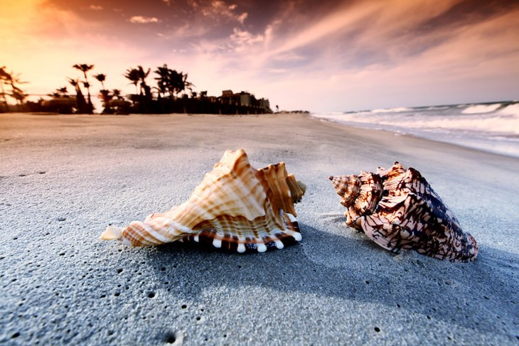 Seashells On The Beach  (8)