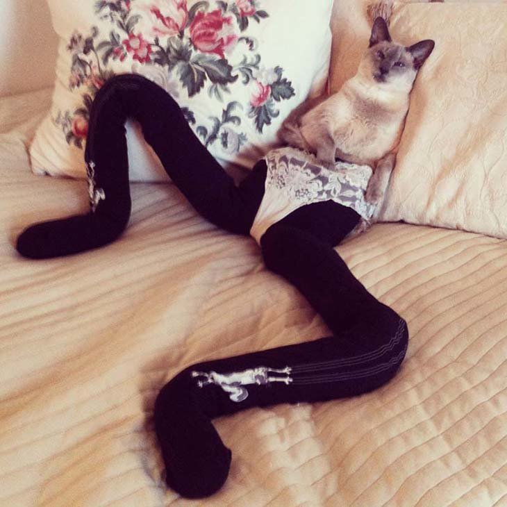Cats wearing tights are way funnier than dogs wearing tights (15)