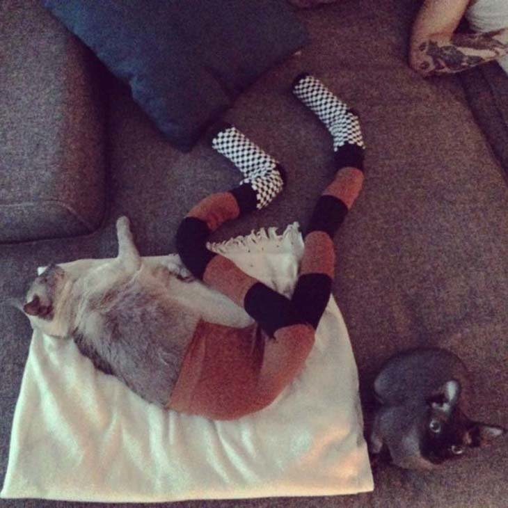 Cats wearing tights are way funnier than dogs wearing tights (4)