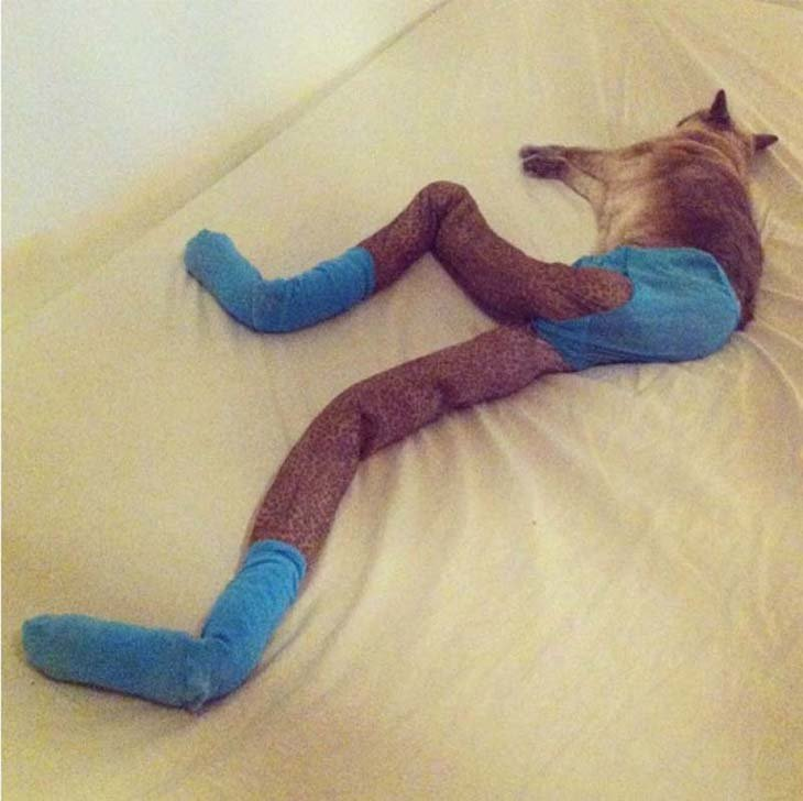 Cats wearing tights are way funnier than dogs wearing tights (3)