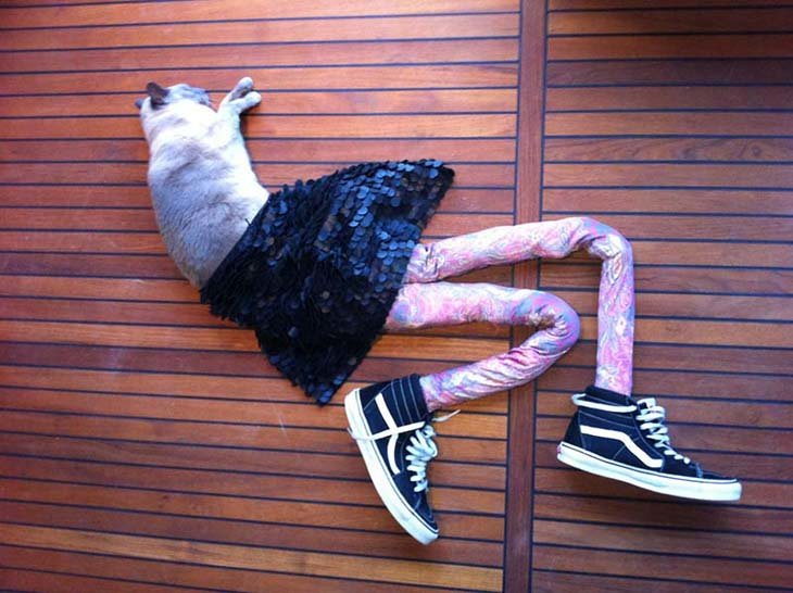 Cats wearing tights are way funnier than dogs wearing tights (14)