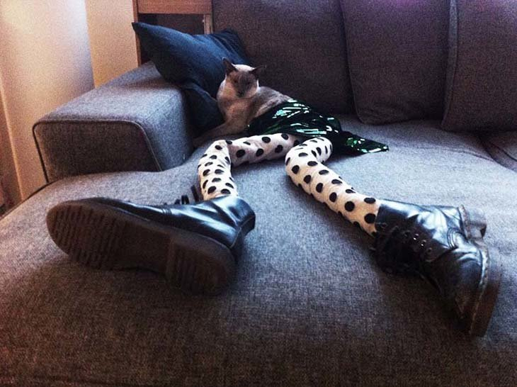 Cats wearing tights are way funnier than dogs wearing tights (13)