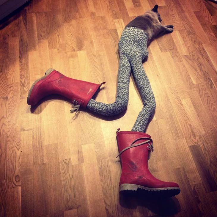Cats wearing tights are way funnier than dogs wearing tights (10)