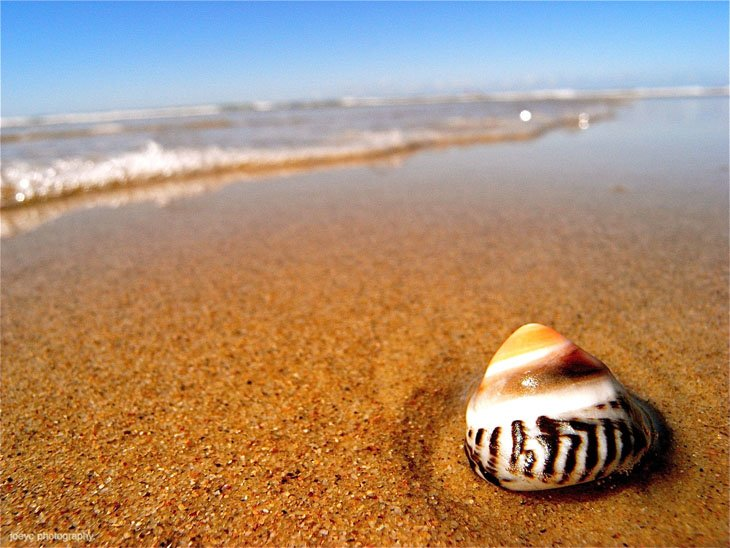 Seashells On The Beach  (7)