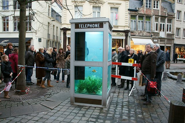 Phone Booths Converted into Outdoor Fish Aquariums  (1)