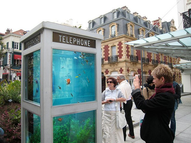 Phone Booths Converted into Outdoor Fish Aquariums  (5)