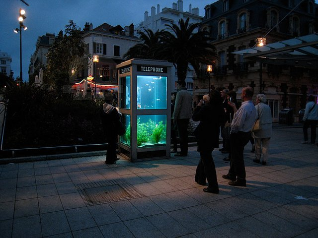 Phone Booths Converted into Outdoor Fish Aquariums  (4)
