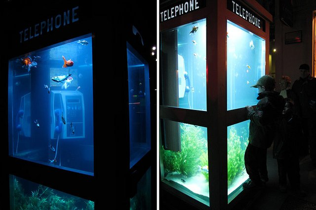 Phone Booths Converted into Outdoor Fish Aquariums  (2)