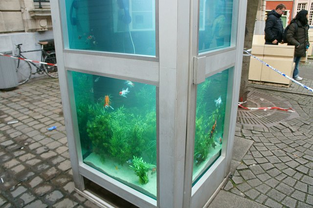 Phone Booths Converted into Outdoor Fish Aquariums  (7)