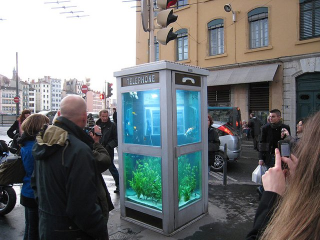 Phone Booths Converted into Outdoor Fish Aquariums  (8)