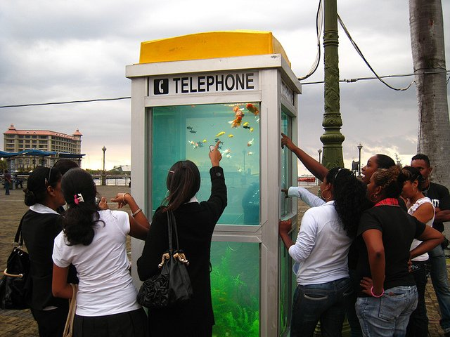 Phone Booths Converted into Outdoor Fish Aquariums  (9)