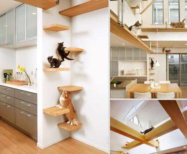 13 Fabulous pet Furniture Ideas