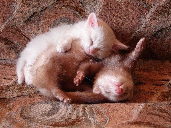 beautiful animals that use other animals for pillow  (16)