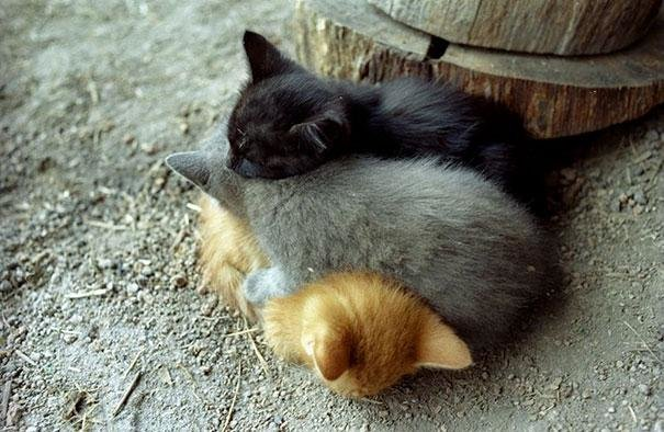 beautiful animals that use other animals for pillow  (1)