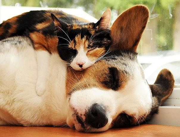 beautiful animals that use other animals for pillow  (9)