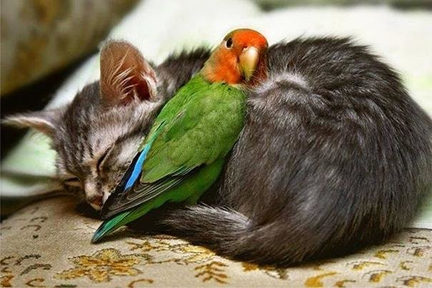beautiful animals that use other animals for pillow  (3)
