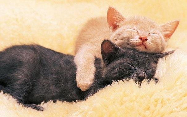 beautiful animals that use other animals for pillow  (24)