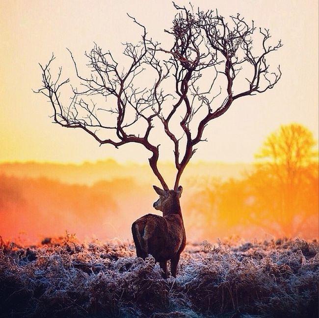 Beautiful surreal photos (21)