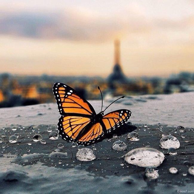 Beautiful surreal photos (11)