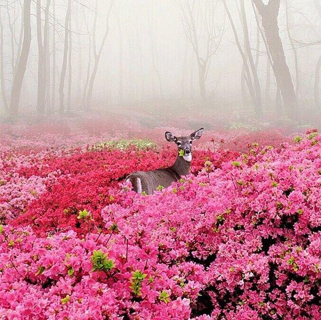 Beautiful surreal photos (7)